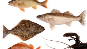 Svensk Fisk app 4